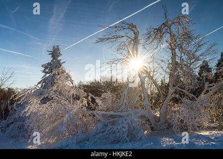 Trees in the snow at the top of the Feldberg, Hesse, Germany - Stock Photo
