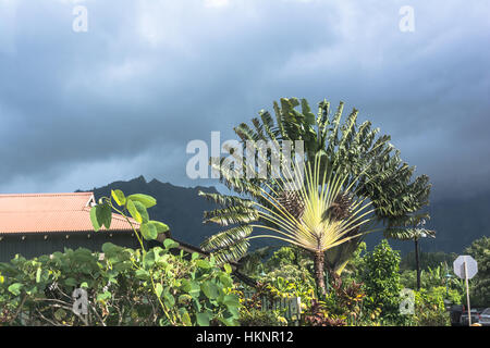View of the Travellers Palm in Hanalei, Kauai, Hawaii - Stock Photo
