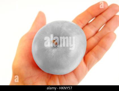 Grey apple in hand - Stock Photo
