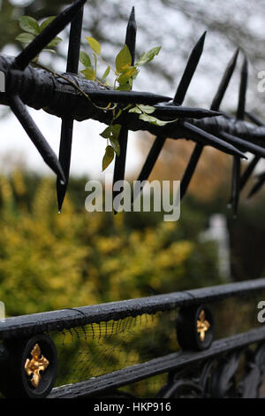 wet black metal barbed wire with a drop of water on a fence close up selective focus blurred background - Stock Photo