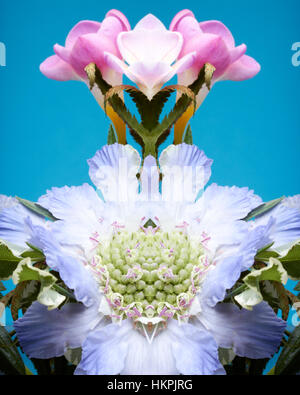 A symmetrical and reflected image of pink and purple flowers against a blue background - Stock Photo