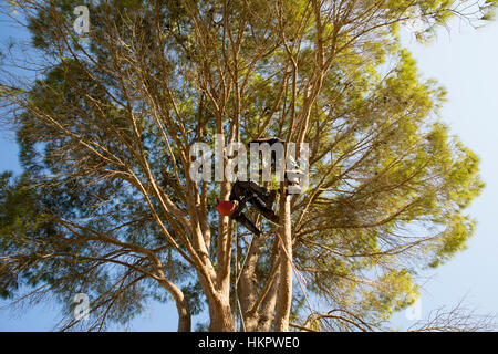 Cutting down a large garden tree - Stock Photo