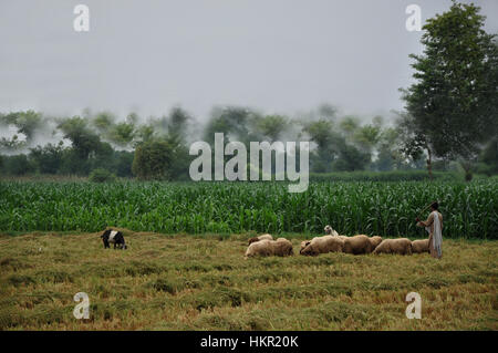 Village kid with farm animals in the green agricultural fields