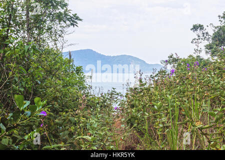 Ilhabela, Brazil, End of trail in the middle of atlantic forest - Stock Photo