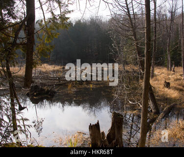 A small pond surrounded by golden grasses and forest, with dead trees and stumps.  The sky is reflected in the calm - Stock Photo