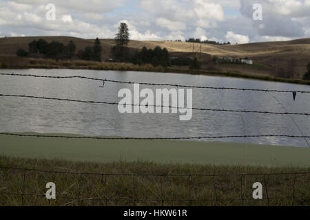 Moscow, Idaho, USA. 17th Nov, 2016. The ponds located at Syringa Mobile Home Park are used as sewage treatment. - Stock Photo