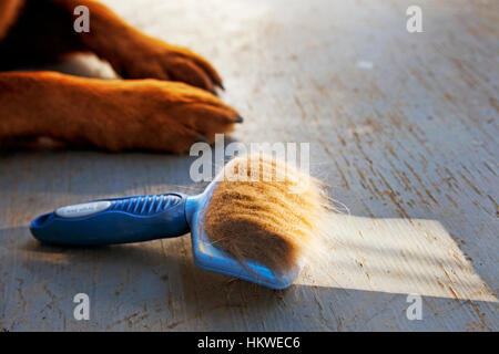 Dog's grooming brush with lots of dog fur in it. - Stock Photo