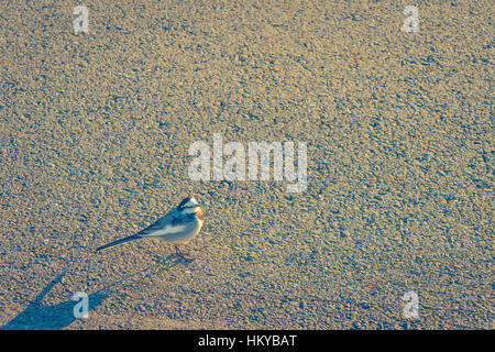 Bird on the road ( Filtered image processed vintage effect. ) - Stock Photo