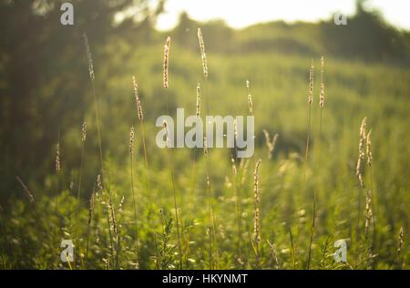 Grass vertical lines - Stock Photo