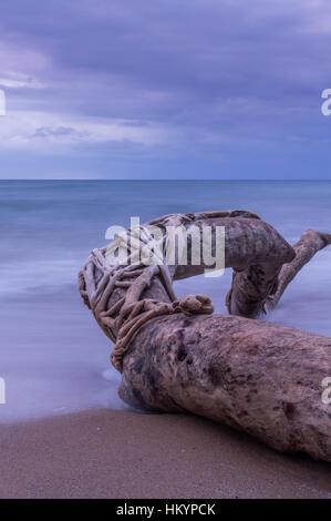 Driftwood on the beach long exposure. - Stock Photo