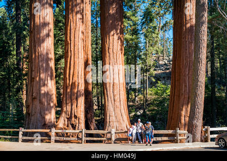 Family takes pictures in front of giant sequoia trees at Grant Grove in Kings Canyon National Park, California, - Stock Photo