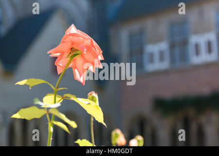 XANTEN, GERMANY - SEPTEMBER 07, 2016: The Rose of St. Victor reflects the sunlight shining into the patio of the - Stock Photo