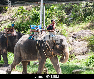 An elephant handler or mahout rides in Phuket, Thailand - Stock Photo