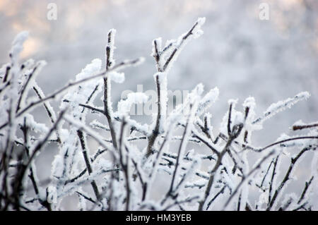 Snowy Branches In Blue Key, Large Detailed Closeup, Gentle Twigs Bokeh, Horizontal - Stock Photo