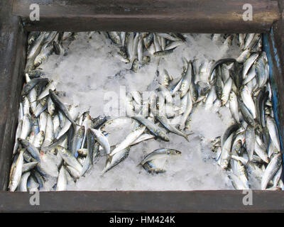 Dried fish preservation - Stock Photo