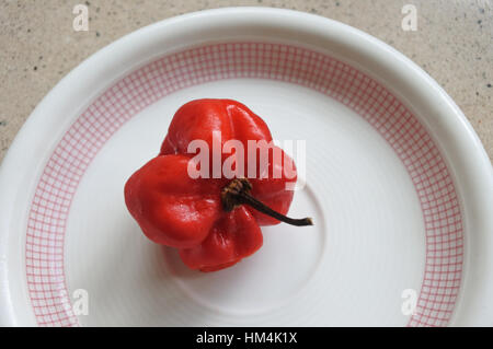 Flat lay view of one Red habanero in a plat. Habanero chilis are very hot, rated 100,000Ð350,000 on the Scoville - Stock Photo