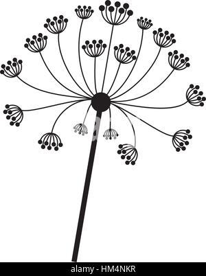 silhouette dandelion with stem and pistil closeup . Vector illustration - Stock Photo