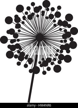 contour dandelion with stem and pistil closeup vector illustration - Stock Photo