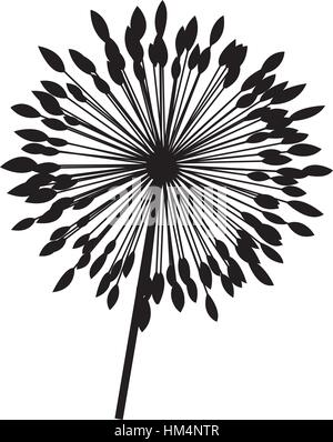 silhouette dandelion with stem and pistil closeup vector illustration - Stock Photo