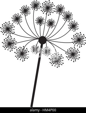 silhouette dandelion with stem and pistil closeup vector illustration . Vector illustration - Stock Photo