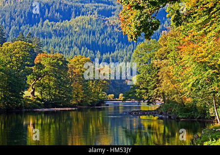 Colourful deciduous trees reflected in the calm waters of the River Tay on a sunny autumn day, a forestry plantation - Stock Photo