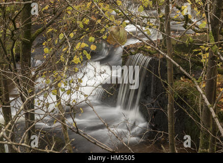 One of the Blaen y Glyn Waterfalls, on the River Caerfanell, (tributary of the Usk),  Brecon Beacons. - Stock Photo