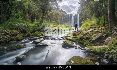 Hiker facing Whangarei Waterfall, temperate rainforest, Whangarei, Northland, North Island, New Zealand - Stock Photo