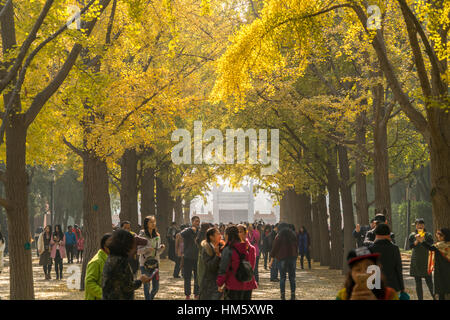 autumn colours at the Temple of Earth Park or Ditan Park in Beijing, People's Republic of China, Asia
