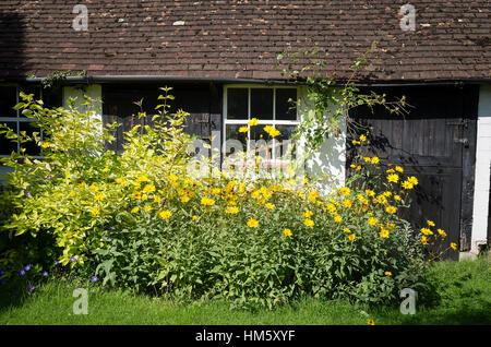 Narrow herbaceous and shrub border outside an old stable in early Autumnstable door,grass, lawn, edge, - Stock Photo