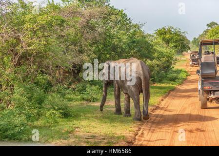 Sri Lanka: wild baby elephant in Yala National Park - Stock Photo