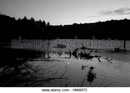 Beaver pond at dusk with reflection of the moon rising in the distance over the tree line monochrome - Stock Photo