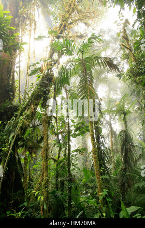 Monteverde Cloud Forest Preserve, Costa Rica - Stock Photo