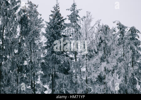 Winter forest. Pines after a heavy snowfall are covered with snow. The picture is taken in cloudy weather. - Stock Photo