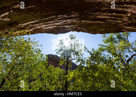 Looking up at the sky from an Aboriginal rock art gallery through a tree canopy. - Stock Photo