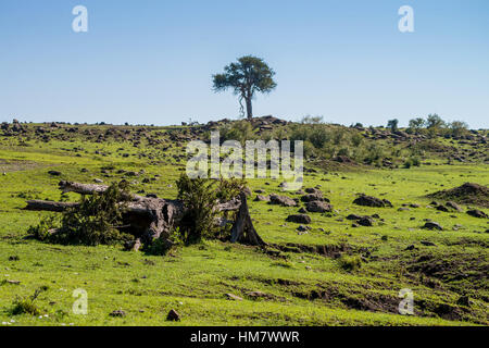 Savanna in Africa - Stock Photo