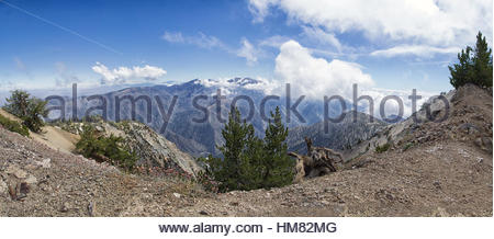 Baden Powell Trail, Wrightwood, Angeles National Forest, California - Stock Photo