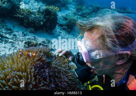 Common Clownfish Amphiprion Ocellaris In Heteractis Malu