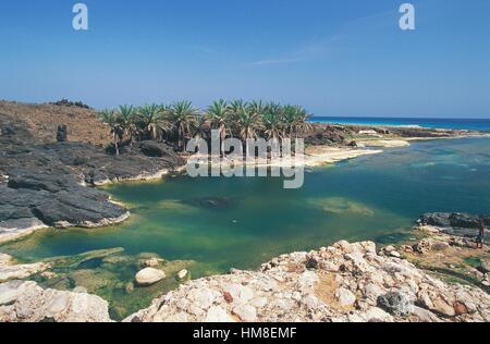 Palm trees on rocky cove along the Arabian Sea coast, near Hadibu, Socotra island, Yemen. - Stock Photo