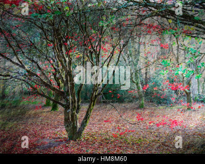 Autumn hues, JFK memorial park, New Ross, Co. Wexford, Ireland - Stock Photo