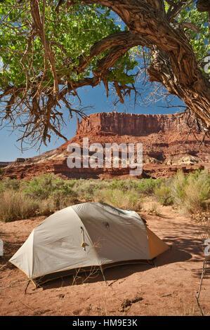 Campsite under cottonwood tree, Potato Bottom Camp, Bighorn Mesa in distance, White Rim Road area, Canyonlands National - Stock Photo