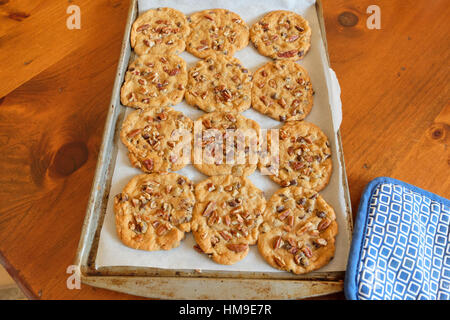 A baking pan with freshly baked Chocolate Chip pecan cookies. USA. - Stock Photo