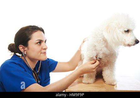 woman veterinarian checking heath of dog isolated on white - Stock Photo