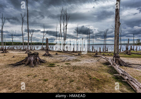 Dead Trees in the forest around a lake with low water levels. This photo depicts drought conditions and Climate - Stock Photo