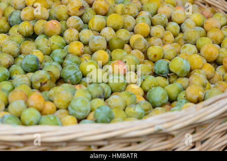 A basket full of greengage plums on a market stall in Charente-Maritime on the southwestern coast of France in August - Stock Photo