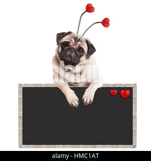 cute pug puppy dog hanging on blank blackboard promotional sign, isolated on white background - Stock Photo