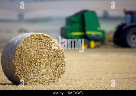 Round straw bales on farmland. - Stock Photo