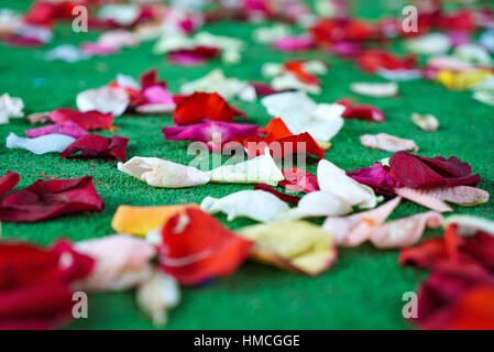 Red, white rose petals scattered on green carpet - Stock Photo