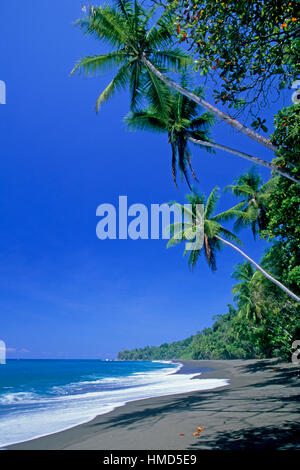 Beach and rainforest in Corcovado National Park, Osa Peninsula, Costa Rica. - Stock Photo