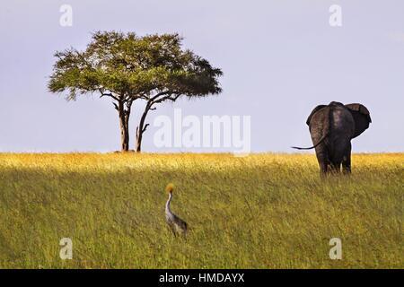 Serengeti National Park Tanzania Landscape with Distant Isolated Acacia Tree and Elephant on the Horizon - Stock Photo
