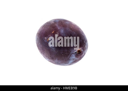 Homegrown organic pile of blue plums isolated on white background. Bunch of ripe purple plums. Studio shot. - Stock Photo